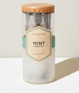 Eco Planter - Mint