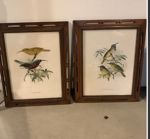 Pair of Vintage Matted Framed Bird Prints