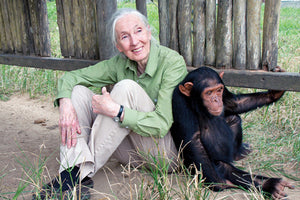 Let's talk about the Jane Goodall organization 🦍