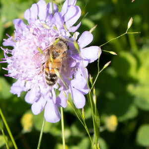 Bees and their olfactory senses