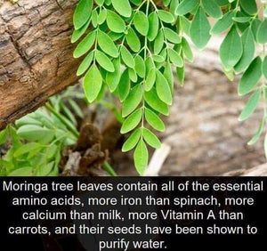 10 Powerful Health Benefits Of Moringa