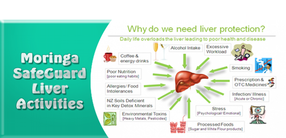 MORINGA SUPPORTS LIVER FUNCTION