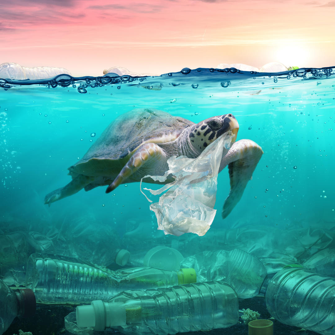 Eco-Friendly Gifts Blog: Why Is Plastic Pollution Bad For All Of Us?