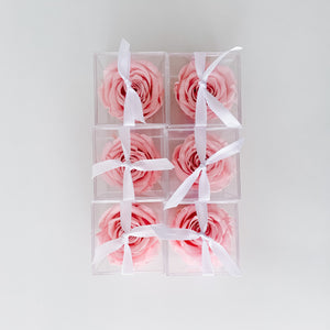 Lasting Rose Acrylic Box - Blush Pink