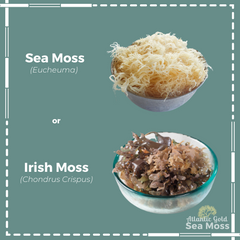 sea moss, irish moss, difference between sea moss and irish moss, sea moss vs. irish moss, sea moss gel