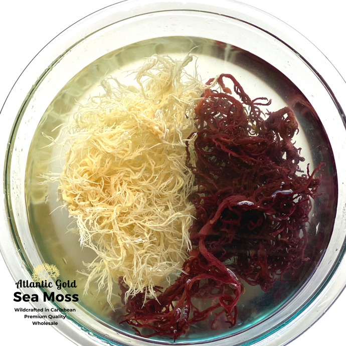 Wholesale Sea Moss, 12/Case, Gold'n'Purp