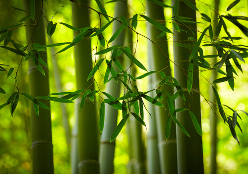 Bamboo Qualities