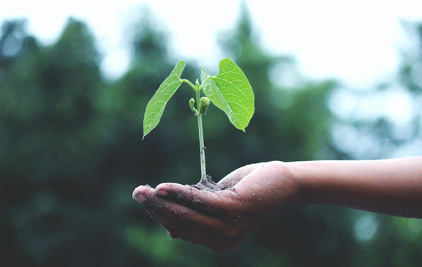 Persin holding green plant