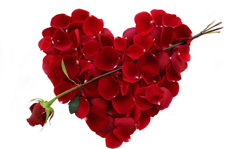 red rose petals in heart shape with one long stem red rose in the middle