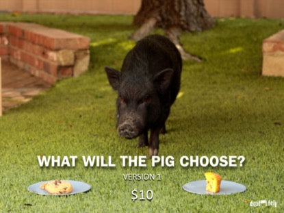 What Will The Pig Choose?