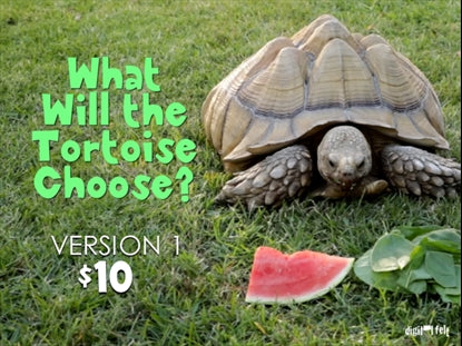 What Will the Tortoise Choose?