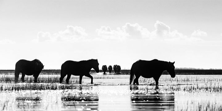 """Dawn Striders"" by Eve Turek Photography"