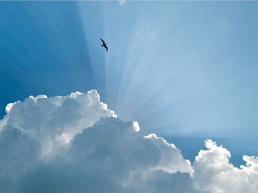 """Gull and Glory"" by Eve Turek Photography"