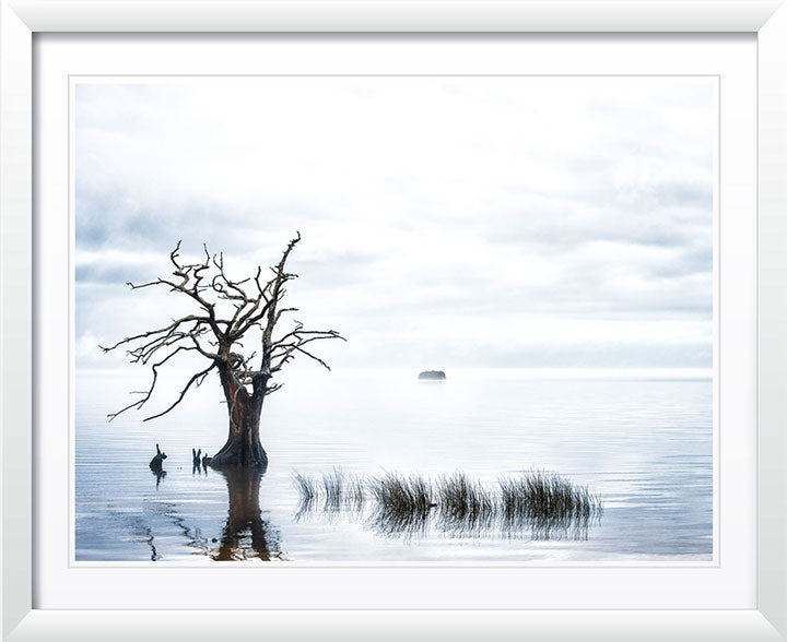 """Sentinel Cypress"" by Eve Turek Photography"