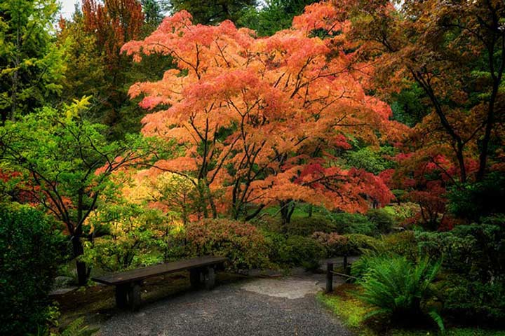 """Japanese Gardens"" by Joshua Johnston Photography"