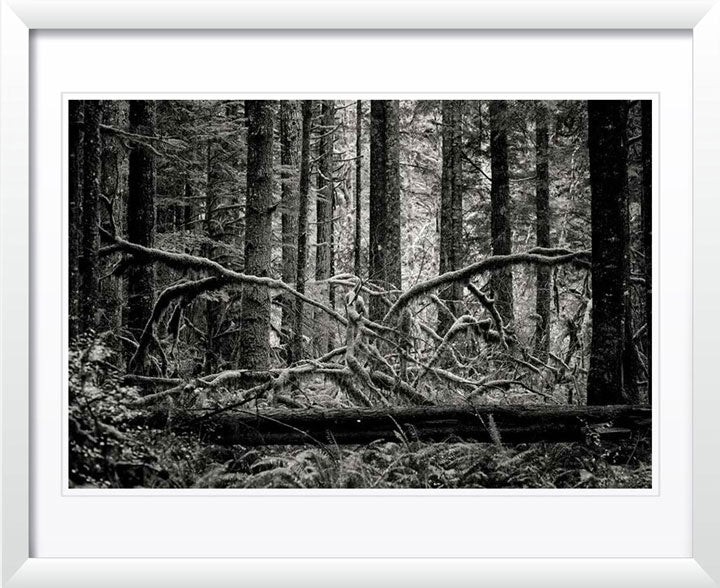 """Creature of the forest"" by Joshua Johnston Photography"