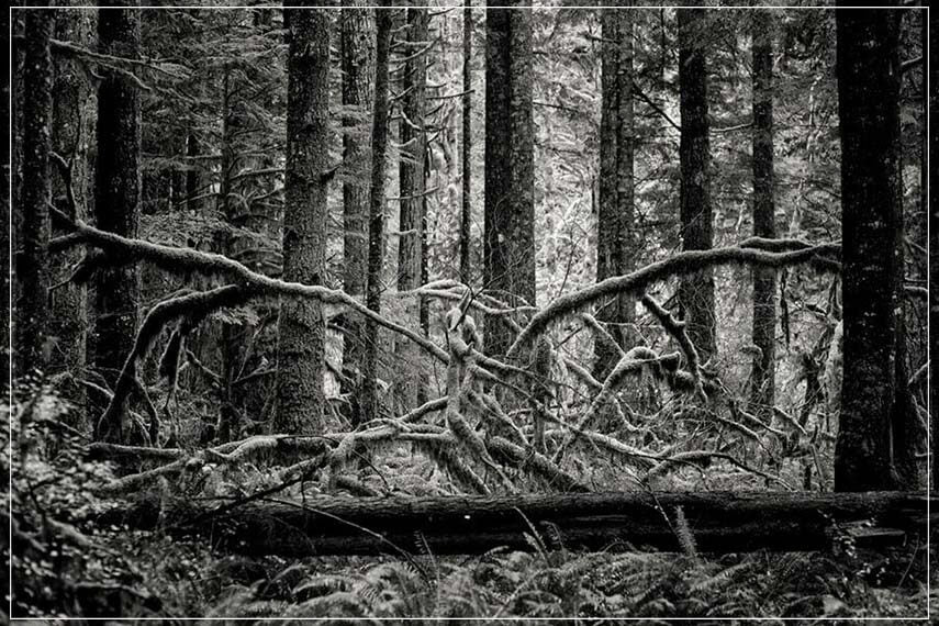 """Creature of the forest"" by Joshua Johnston Photography-Artography Limited"