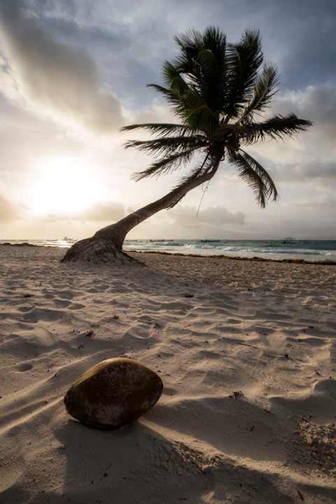 """Coconut Paradise"" by Joshua Johnston Photography"