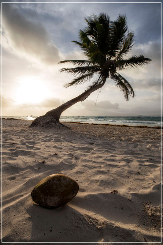 """Coconut Paradise"" by Joshua Johnston Photography-Artography Limited"