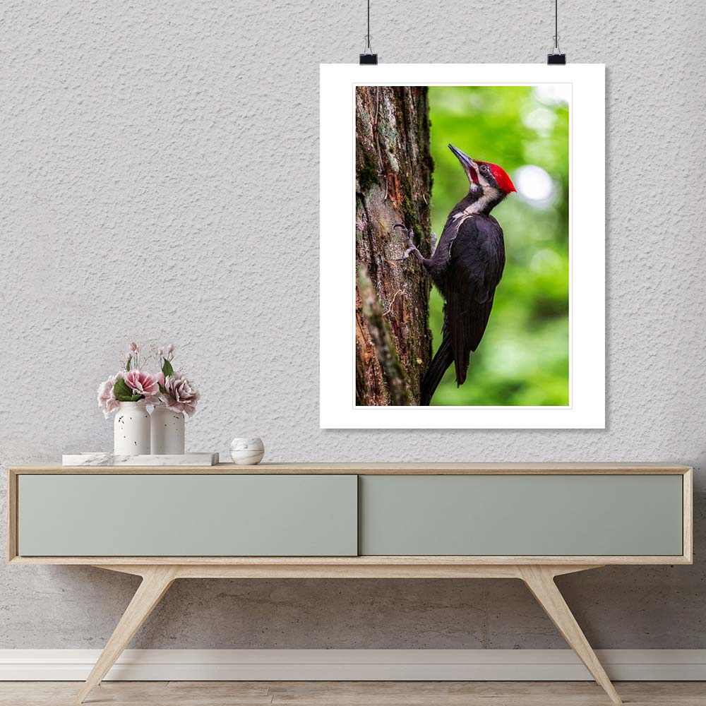 """Pileated Woodpecker"" by Joshua Johnston Photography-Artography Limited"
