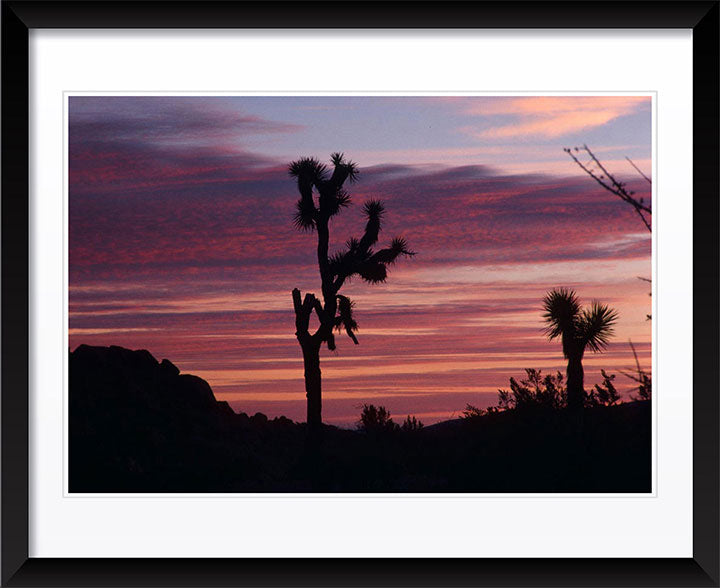"""Cacti Set"" by Robert Manno Photography"