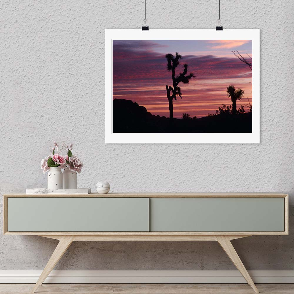 """Cacti Set"" by Robert Manno Photography-Artography Limited"