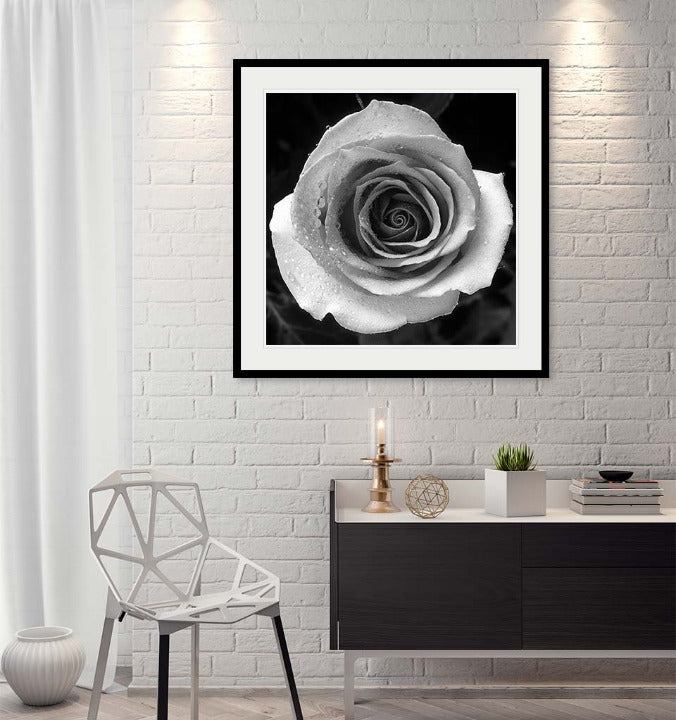 """Rose"" by Tom Artin Photography-Artography Limited"