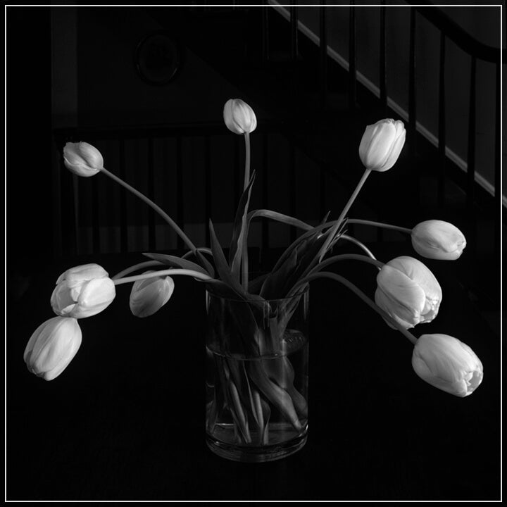 """Tulips In Vase"" by Tom Artin Photography-Artography Limited"