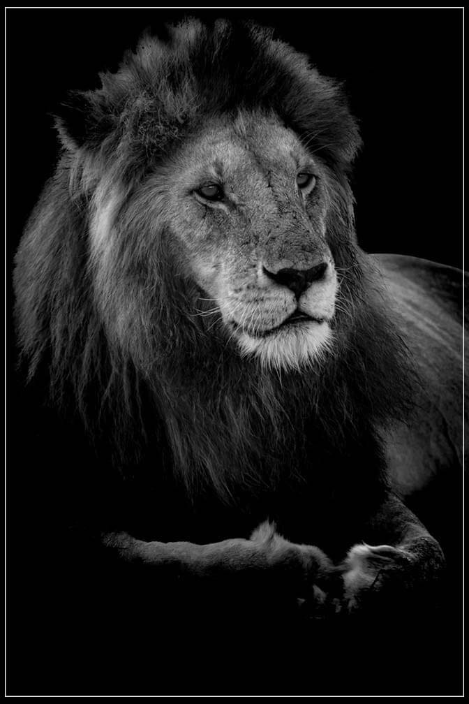 """Profile of a King"" by Viet Chu Photography-Artography Limited"