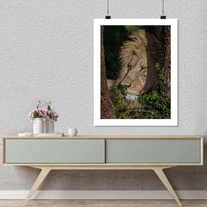 """Lion in shade"" by Viet Chu Photography-Artography Limited"