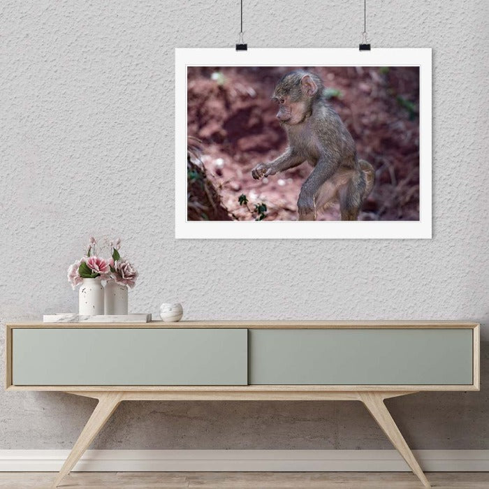"""Baby Baboon"" by Viet Chu Photography-Artography Limited"