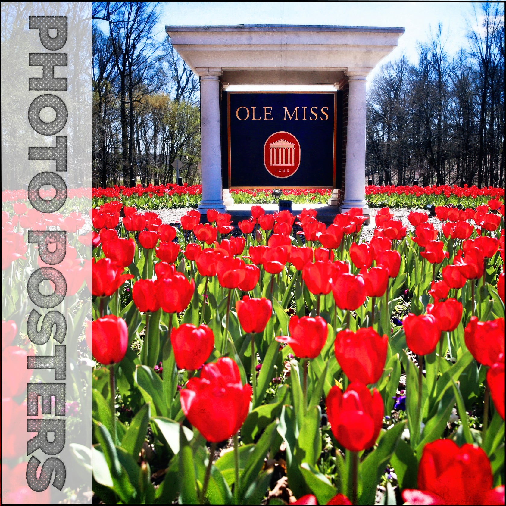 Ole Miss Rebels - Poster