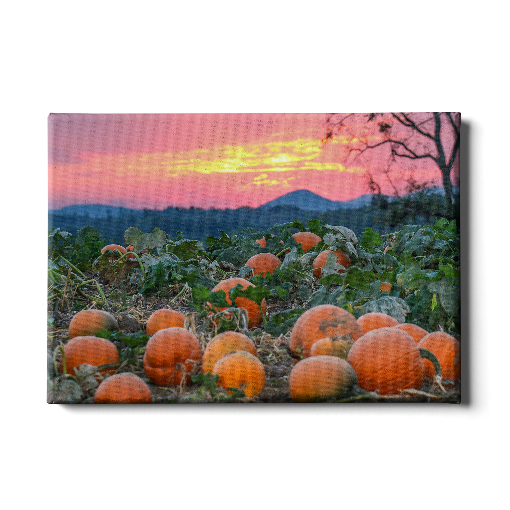 Sunset Pumpkin Patch - College Wall Art#Canvas