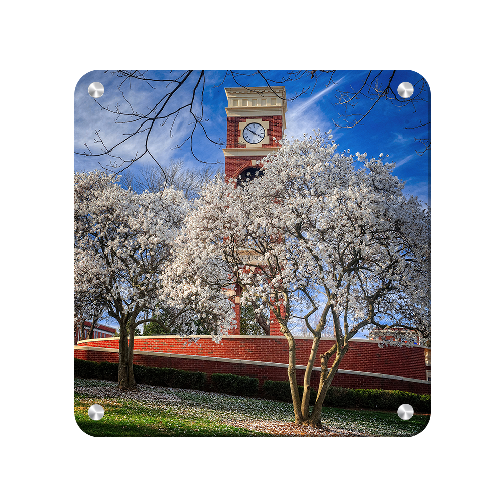 ETSU - Spring - College Wall Art #Canvas