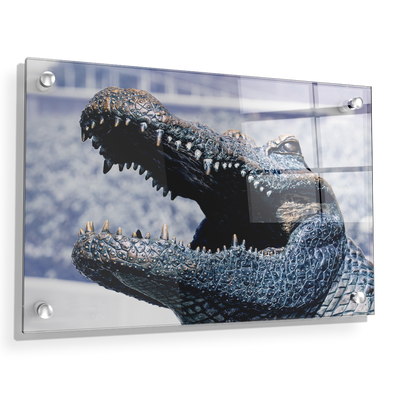 Florida Gators - Bull Gator Up Close - College Wall Art #Acrylic