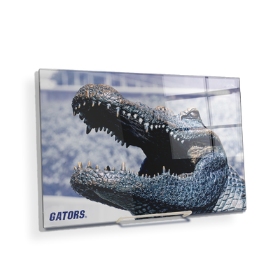 Florida Gators - Bull Gator Up Close - College Wall Art #Acrylic Mini