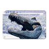 Florida Gators - Bull Gator Up Close - College Wall Art #Metal