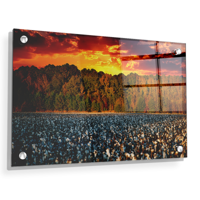 Cotton Field -College Wall Art #Acrylic