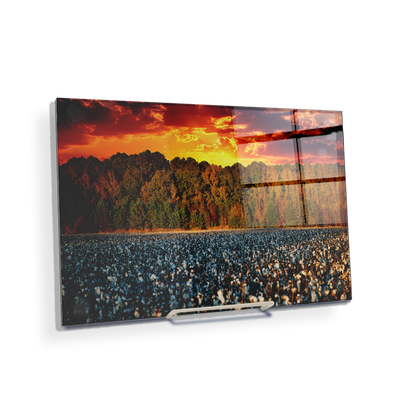 Cotton Field -College Wall Art #Acrylic Mini