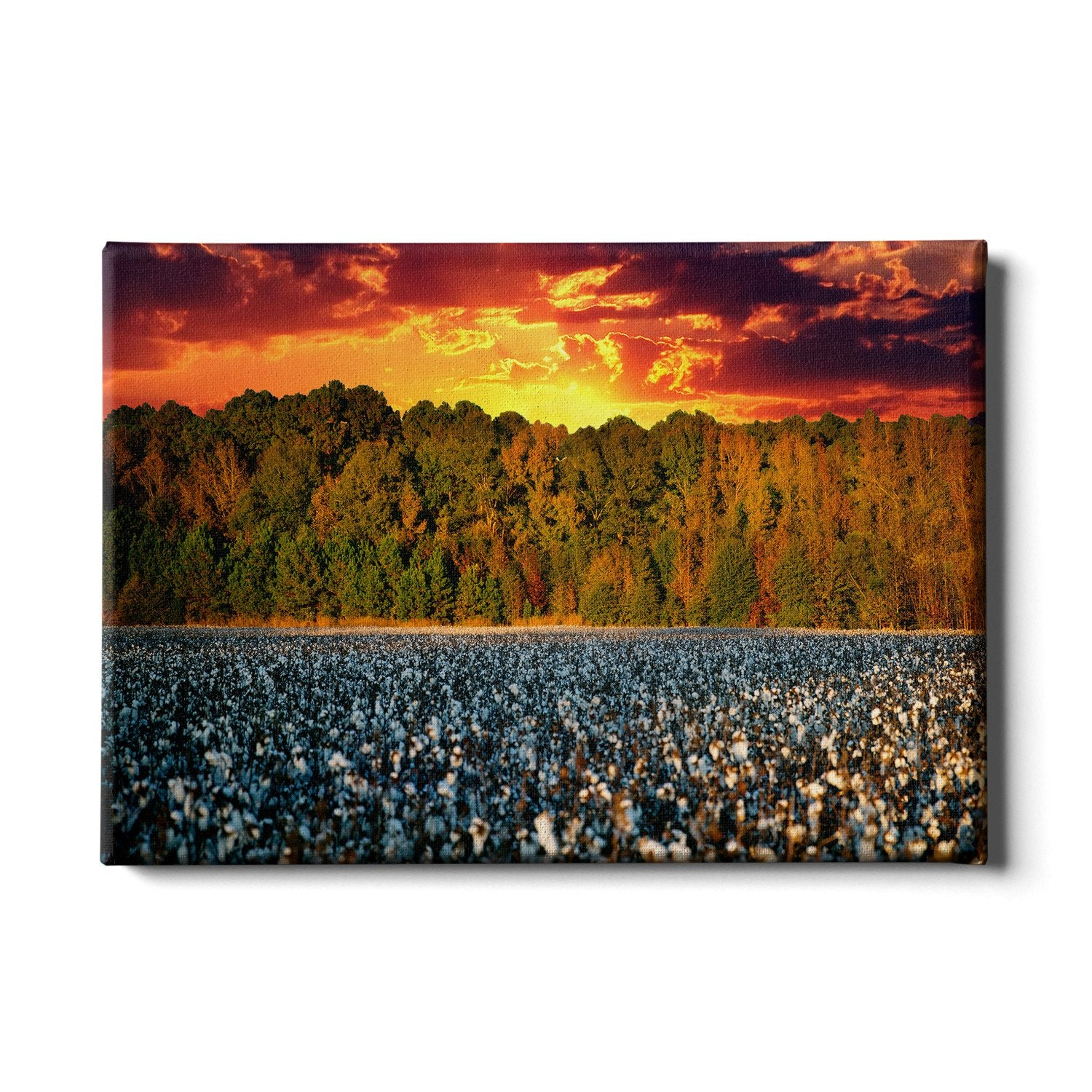 Cotton Field -College Wall Art #Canvas