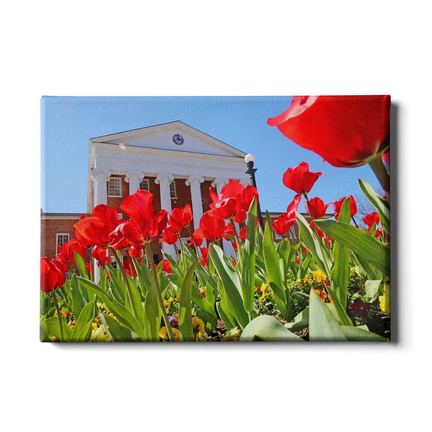 Ole Miss Rebels - Spring Lyceum - College Wall Art #Canvas