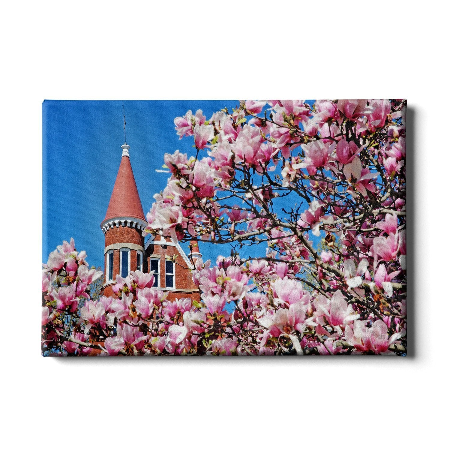 Ole Miss Rebels - Cherry Blossom Ventress - College Wall Art #Canvas