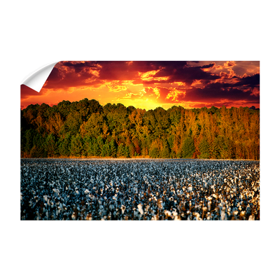 Cotton Field -College Wall Art #Wall Decal