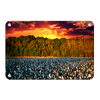 Cotton Field -College Wall Art #Metal
