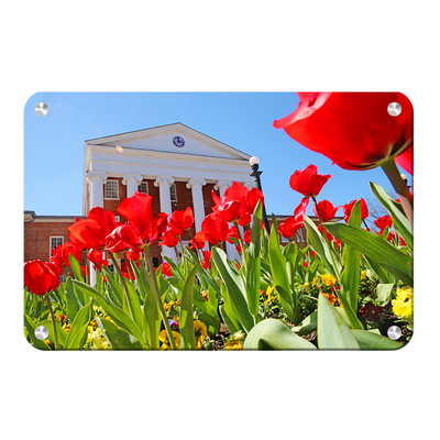 Ole Miss Rebels - Spring Lyceum - College Wall Art #Metal
