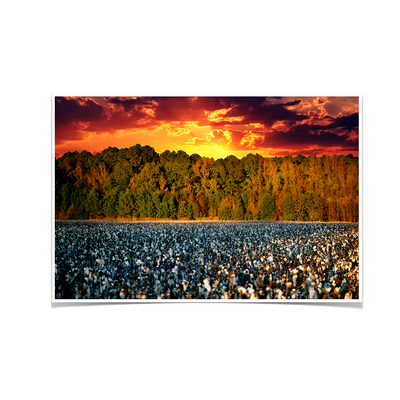 Cotton Field -College Wall Art #Poster