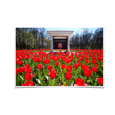 Ole Miss Rebels - Spring Flowers - College Wall Art #Poster