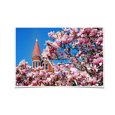 Ole Miss Rebels - Cherry Blossom Ventress - College Wall Art #Poster
