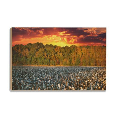 Cotton Field -College Wall Art #Wood