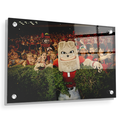 Georgia Bulldogs - Hairy in the Hedges - College Wall Art #Acrylic